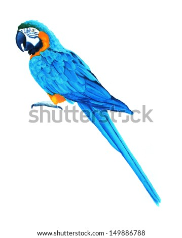 blue and yellow macaw parrot illustration, hand drawn oil pastel bird art, tropical blue bird image for beautiful wildlife animal illustration - stock photo