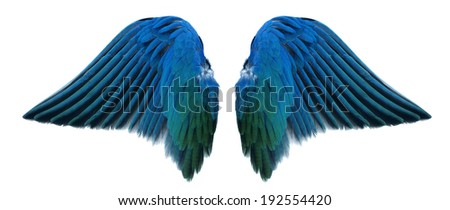 blue angel wing isolated - stock photo