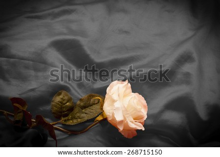 Blue background abstract cloth of wavy folds of silk texture satin or velvet material  of elegant curves blue material with white rose. Photo with place for Your text. Useful as invitation - stock photo