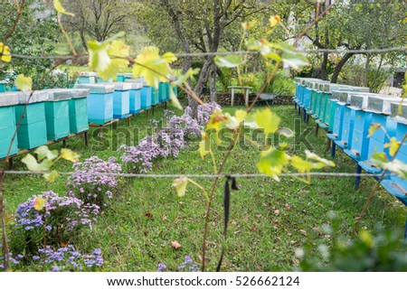 Blue bee hives to stand side by side on the field