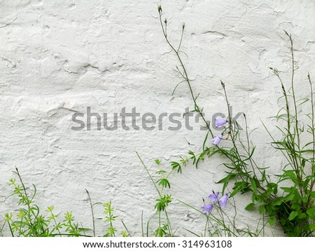 Blue bells and green grass on textured whitewashed wall of a building - stock photo