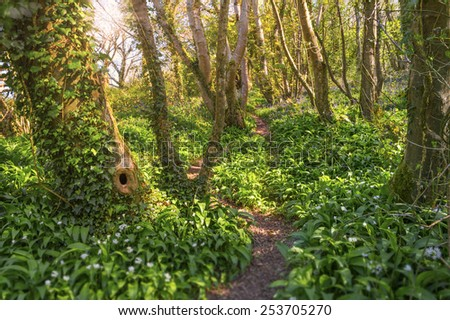 Blue bells in the forest at sunrise - stock photo
