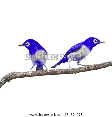 Blue bird on white background
