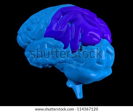 Blue brain with highlighted dark blue parietal lobe on black background - stock photo