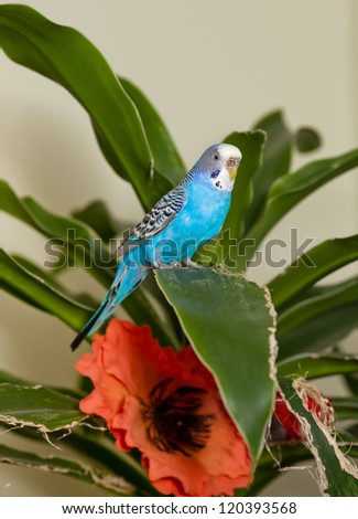 Blue budgerigar sitting on the leaf of plant - stock photo