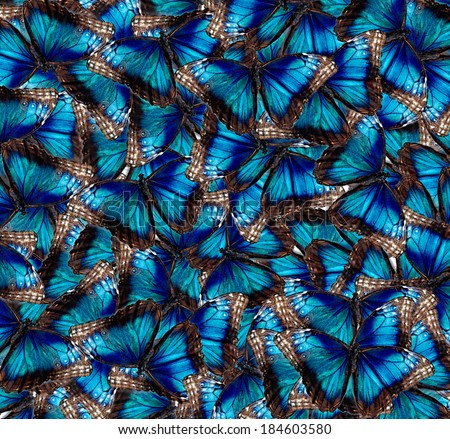 Blue Butterflies in the background - stock photo