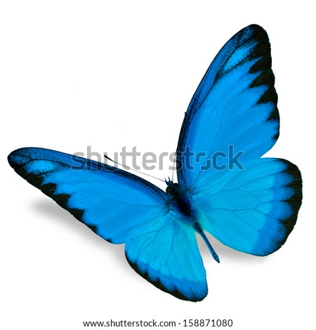 Blue Butterfly flying, isolated on white background - stock photo