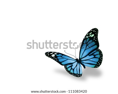 Blue butterfly, isolated on white background