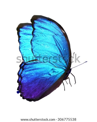 Blue butterfly, isolated on white background - stock photo