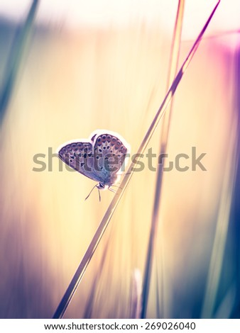 Blue butterfly on the grass - stock photo
