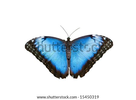 Blue butterfly on white ground - stock photo