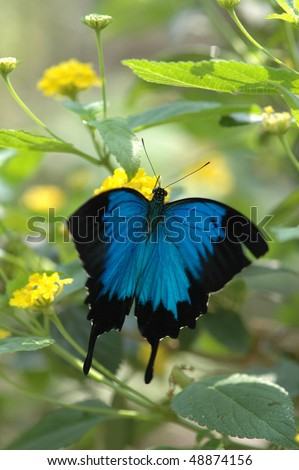 blue butterfly resting on a flower