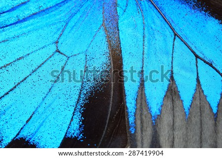 Blue butterfly wing, nature pattern texture background - stock photo