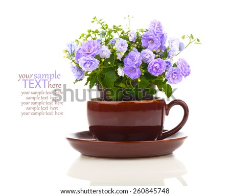 blue Campanula terry flowers in teacup, isolated on white background - stock photo