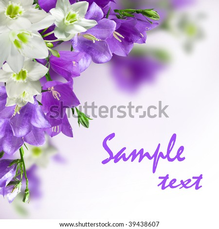 blue campanulas and white lily isolated over white - stock photo
