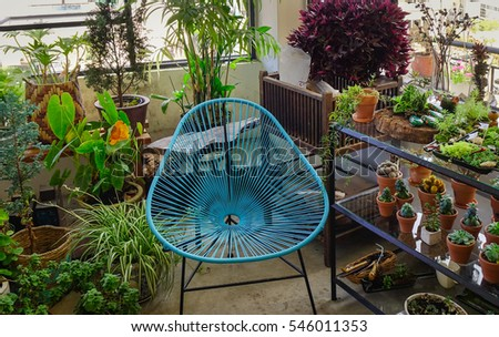 Blue chair in the small garden with many pots of cactus