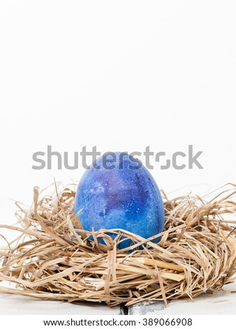 blue colored egg in a bird nest on white background