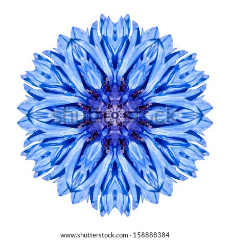 Blue Cornflower Mandala Flower. Kaleidoscope of Centaurea cyanus Isolated on White Background