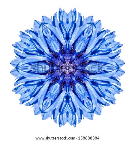 Blue Cornflower Mandala Flower. Kaleidoscope of Centaurea cyanus Isolated on White Background - stock photo
