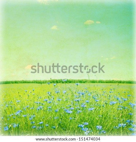 Blue cornflowers in wheat field. Vintage style photo.