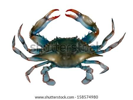 Blue crab on white background - stock photo