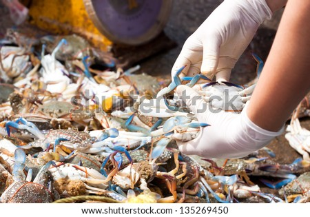 Blue crab or Horse crab in market - stock photo