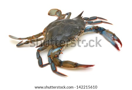 Blue Crab with white background - stock photo