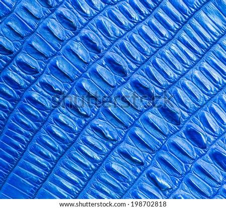 blue crocodile skin texture - stock photo