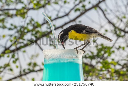 Blue Curacao Drink and the ocean Curacao a tropical island in the Caribbean - stock photo