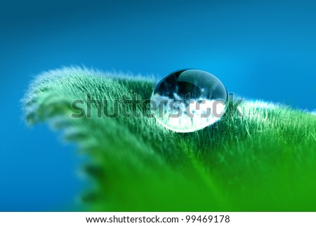 Blue drop on the green leaf - stock photo