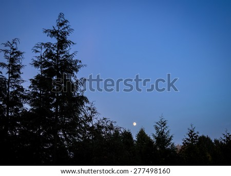 blue evening in the forest - stock photo