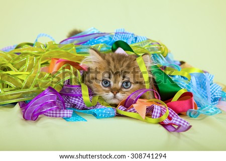 Blue eyed kitten hiding in colourful ribbons on green background - stock photo
