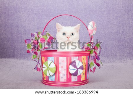 Blue eyed white Selkirk Rex cat sitting inside basket decorated with faux fake lollipop candy on lilac light purple background - stock photo