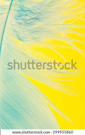 blue feather macro on yellow background - stock photo