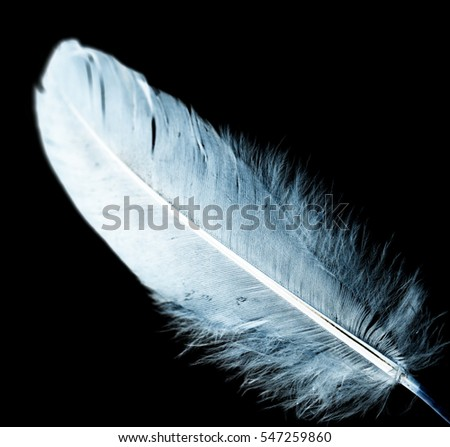 blue feather on a black background
