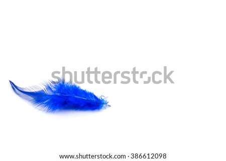 Blue feather on the white background