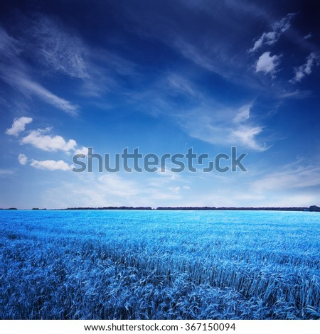 blue field and sky, landscape in surreal color - stock photo