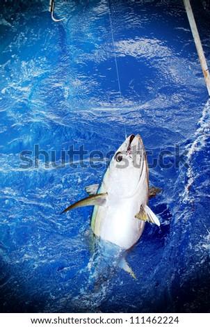 Blue fin bluefin tuna catch - stock photo