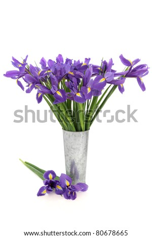 Blue flag iris flower arrangement in a distressed aluminum vase and loose isolated over white background. - stock photo