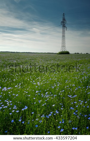 Blue flax field at summertime