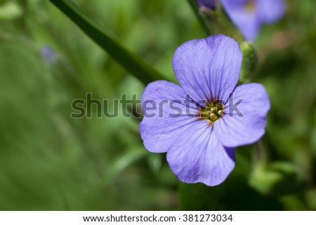 Blue flax flower close-up. Macro image with small depth of field. - stock photo