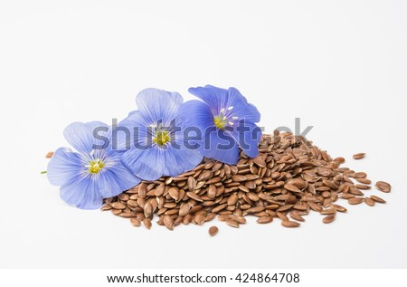 Blue flax flower with seeds isolated on white background - stock photo