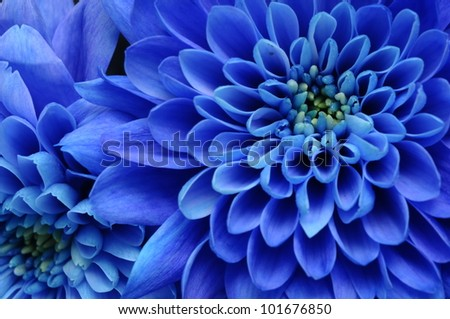Blue Flower Stock Images, Royalty-Free Images & Vectors | Shutterstock