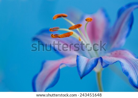 Blue flower isolated against blue - stock photo