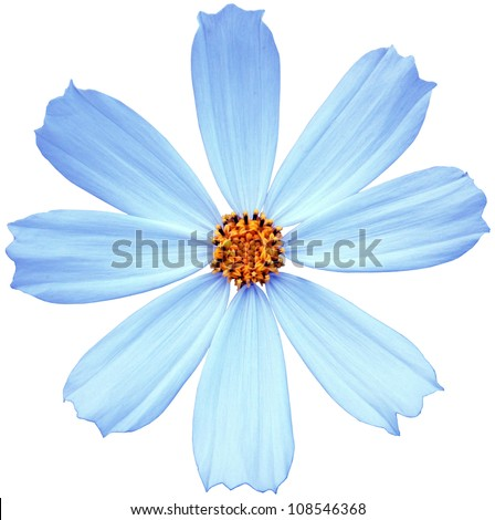 Blue flower isolated on a white background - stock photo