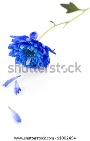 blue flower over white - stock photo