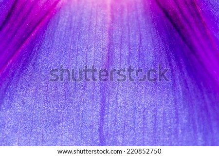 blue flower super macro - stock photo