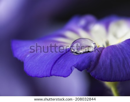 blue flower with a dew drop - stock photo