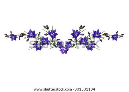 blue flowers campanula isolated on white background - stock photo