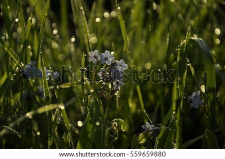 blue flowers, dew. green background